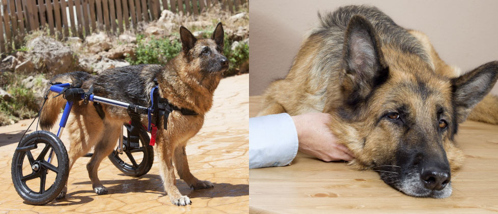 your help makes a difference in the lives of retired k-9s